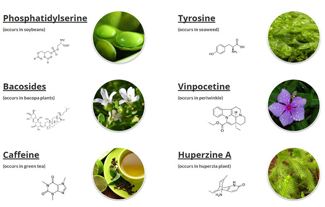 optimind supplement ingredients