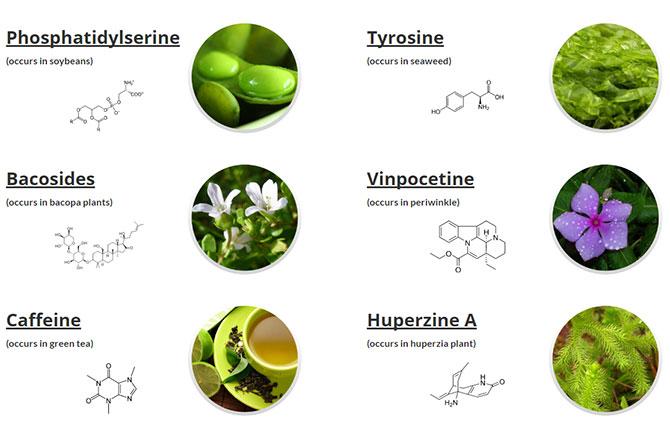 optimind supplement ingredients