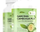 apex garcinia cambogia plus bottle